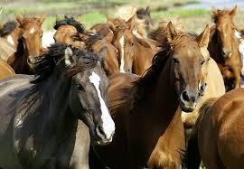 Доходный действующий конный бизнес