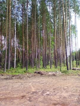 Залесная 19 (Шордор-2) - Фото 3