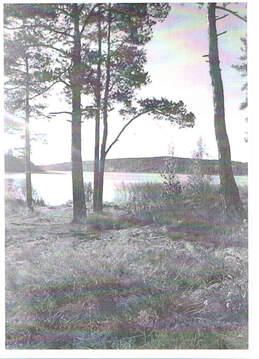 Продам зем.уч. 4 га , первая линия Ладожского озера - Фото 2