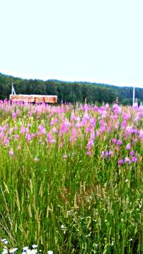 Земля ИЖС, красивые виды, дешево, 35 км от Н.Новгорода - Фото 5