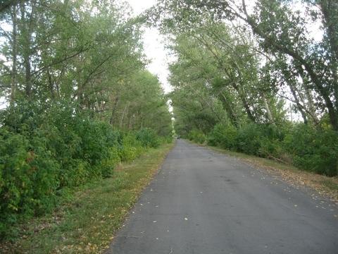 Роща (лесной участок) 330 Га в Воронеже, под дачный поселок. - Фото 3