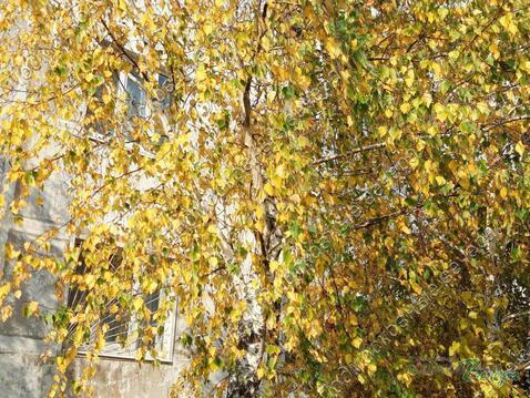 Московская область, Рузский городской округ, рабочий поселок Тучково, . - Фото 3