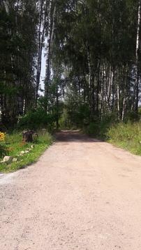 Земельный участок 1,21 га СНТ Сынково - Фото 4