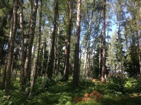 Д. Солослово кп ДПК «Гранит» красивый рельефный лесной участок 1.13 Га - Фото 1
