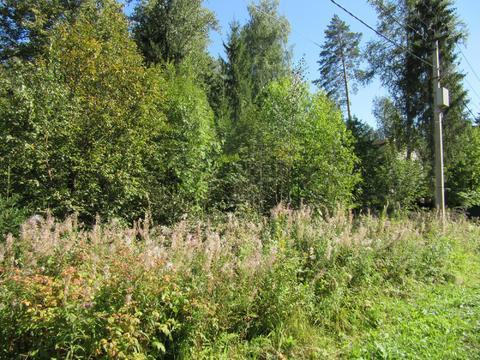Лесной участок 25 сот, Минское ш, 32 км от МКАД, Зеленая Роща - Фото 2