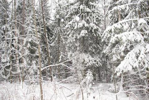 Минское ш, 34 км от МКАД, Зеленая Роща - Фото 3