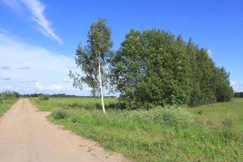 Участок в Псковской области на озере - Фото 2