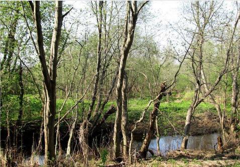 Большой и дешевый участок земли в жилой деревне Конаковского района - Фото 1