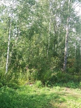 Садовый участок рядом с Дубной - Фото 5