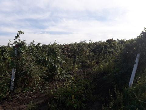 Крупный винзавод в Краснодарском крае - Фото 5