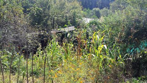 Земельный участок с дачным домиком - Фото 4