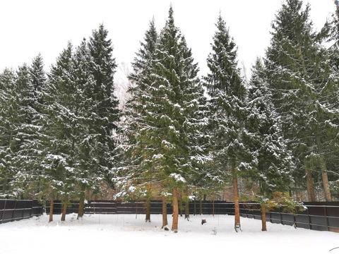 Продаётся участок с лесными деревьями рядом с горнолыжным парком - Фото 3