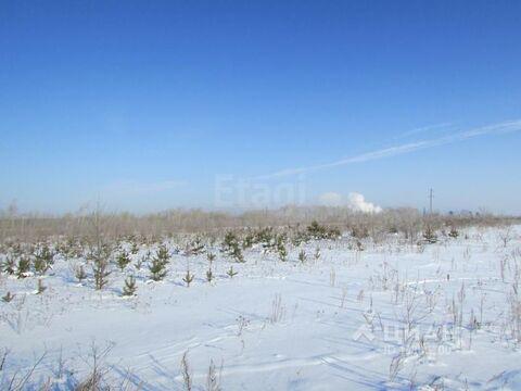 Участок в Курганская область, Шадринск Газовик кп, (1181.0 сот.) - Фото 1