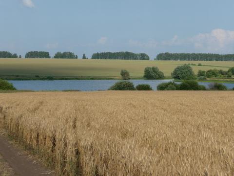 Купить озеро в Тульской области - Фото 5