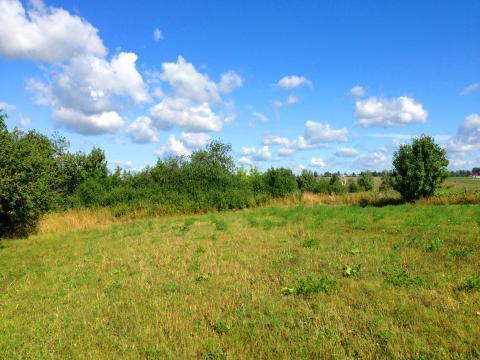 Земельный участок в Ядринском районе 1 Га, ИЖС, с.Большое Чурашево. - Фото 1