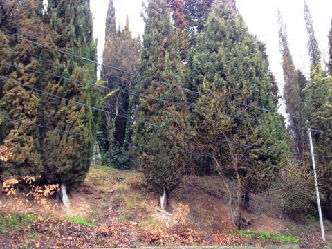 Участок 8 соток в окружении кипариса - Фото 3