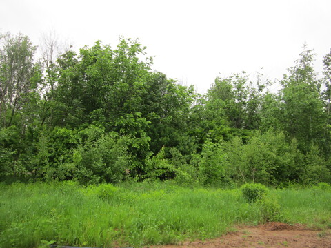 Продается земельный участок в черте г. Пушкино на берегу Учинского вод - Фото 3