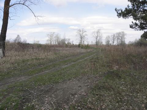 Продам дешево 10 гектар земли в Сухобузимском районе на берегу Енисея - Фото 1