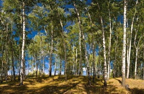 Зеленая Миля, Первомайский (Ясногорск) - Фото 5