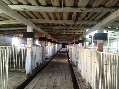 Продам ферму - Фото 5