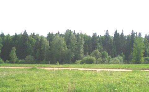520 соток земли сельхозназначения дешево шоссе новая Рига - Фото 5