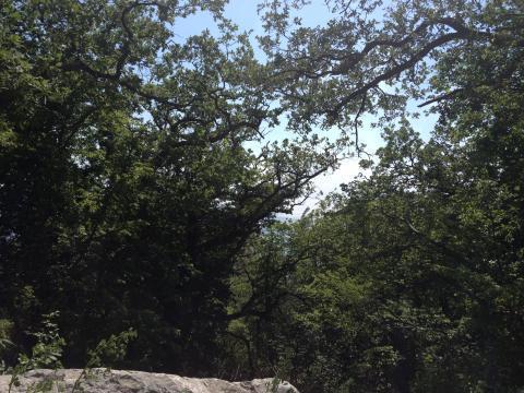 Участок в 100метрах от моря среди сосен ели и кипариса - Фото 1
