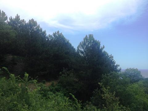 10+10+10 соток в Алупке с панорамным видом, рядом хвойный лес - Фото 5