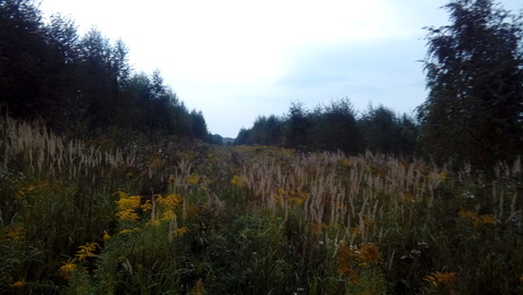 Большое Петровское 8 соток с лесными деревьями, ИЖС. - Фото 1
