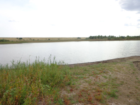 """Зарыбленный пруд """"Журавский"""" - Фото 2"""
