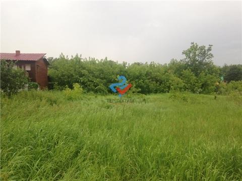 Чернозерский кордон , Сосновый бор - Фото 4