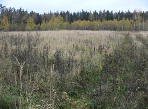 Продажа земельного участка на 16 км. Новорижского шоссе