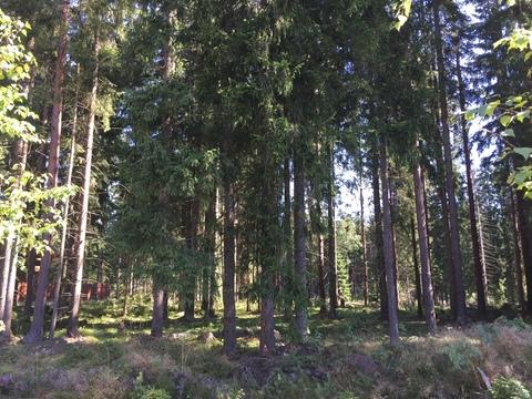 Предлагается участок 30 соток в ДНП Медное озеро в 18 кв от КАД - Фото 2