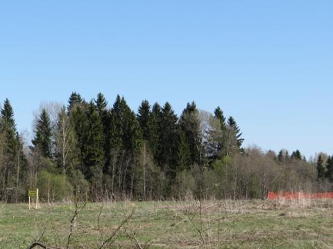 Земельный участок по Новорижскому шоссе рядом с Рузским водохранилищем - Фото 2