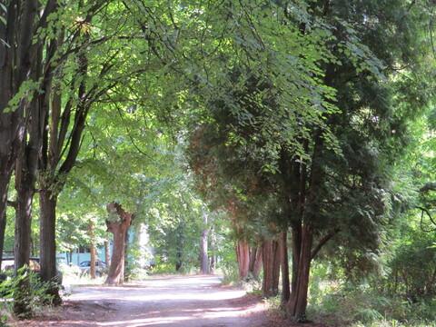 Участок в Малаховка-парке - Фото 4
