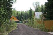 Прекрасный участок в хвойном лесу, Можайское - Минское, Летний отдых.