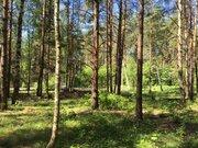 Лесной участок 10 соток д.Копнино ИЖС