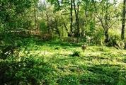 Продажа участка 9 соток на родине Льва Толстого в Ясной Поляне - Фото 4