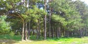 Продажа участка, Андреевский, Тюменский район, Тилимбаева ул - Фото 2