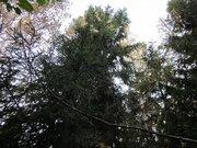 """Лесной участок 13 соток, Минское шоссе, Сивково, Зеленая роща"""", охрана"""