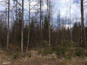 Лесной участок в коттеджном поселке 12 соток, со всеми оплаченными . - Фото 2