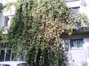 Снять трехкомнатную квартиру в центре Новороссийска, Аренда квартир в Новороссийске, ID объекта - 326586736 - Фото 10