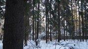 Лесной участок в Кратово - Фото 1