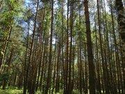 Лесной участок 10 соток ИЖС дер. Устиновка