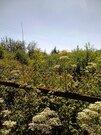 Продам сад в СНТ Любитель-2 - Фото 2