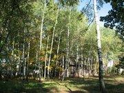 Участок 61 сот. с лесными деревьями 12 км. от МКАД п. Клязьма - Фото 2