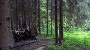 Эксклюзив 15 сот. с лесными деревьями, Ново-Александрово, 7 км от МКАД - Фото 3