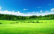 Продаются участки в лесу, 200 соток. Московская область, Можайский рай - Фото 2