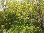 """Продаётся дачный участок с садовым домиком ст """"Полянка"""" - Фото 5"""