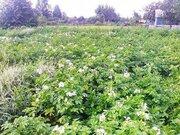 Дача в Ялуторовске в отличном районе, Дачи в Ялуторовске, ID объекта - 502651231 - Фото 3