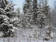 Лесной участок 25 сот, Минское ш, 32 км от МКАД, Зеленая Роща - Фото 1